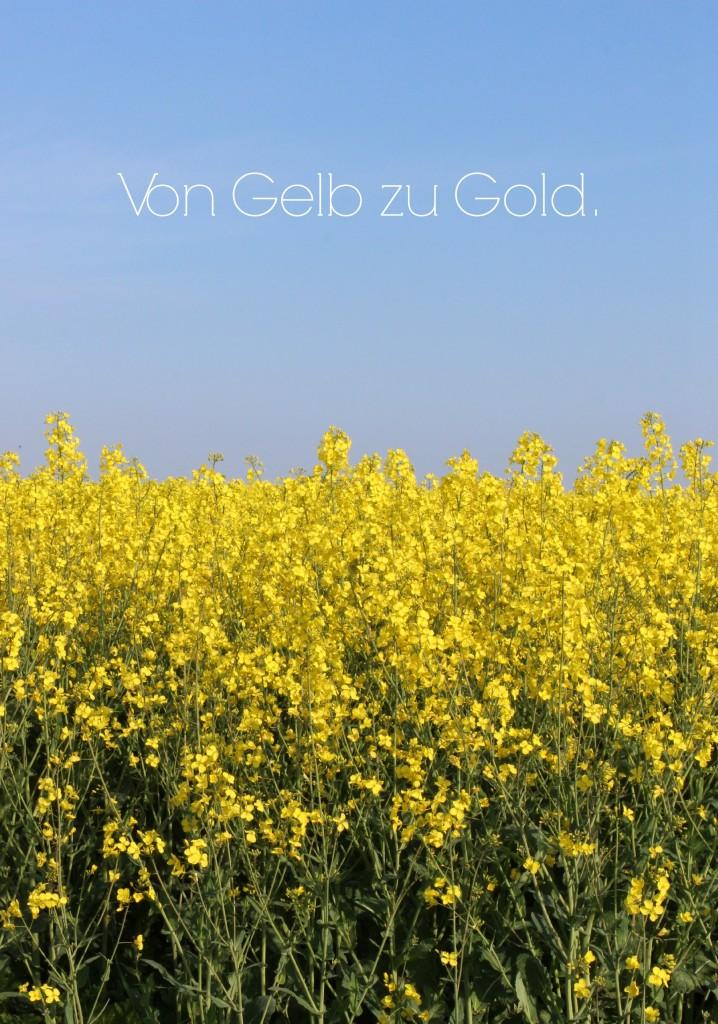 Über Blogger im Rapsfeld und ein gelingsicheres und eindruckstarkes 4-Gänge-Menü…
