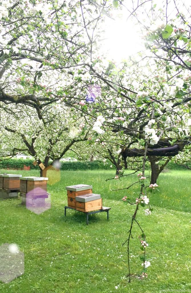 {Mai}Bücher für Bienenfreunde und Hobbyimker
