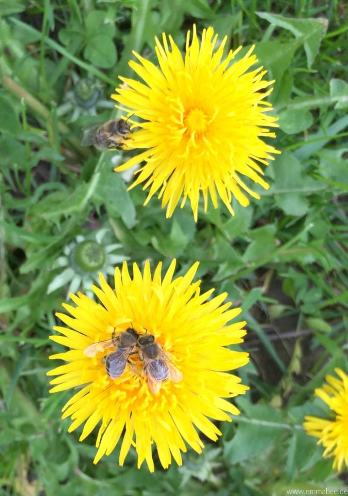 EmmaBee Leben Imkern Bienenbox