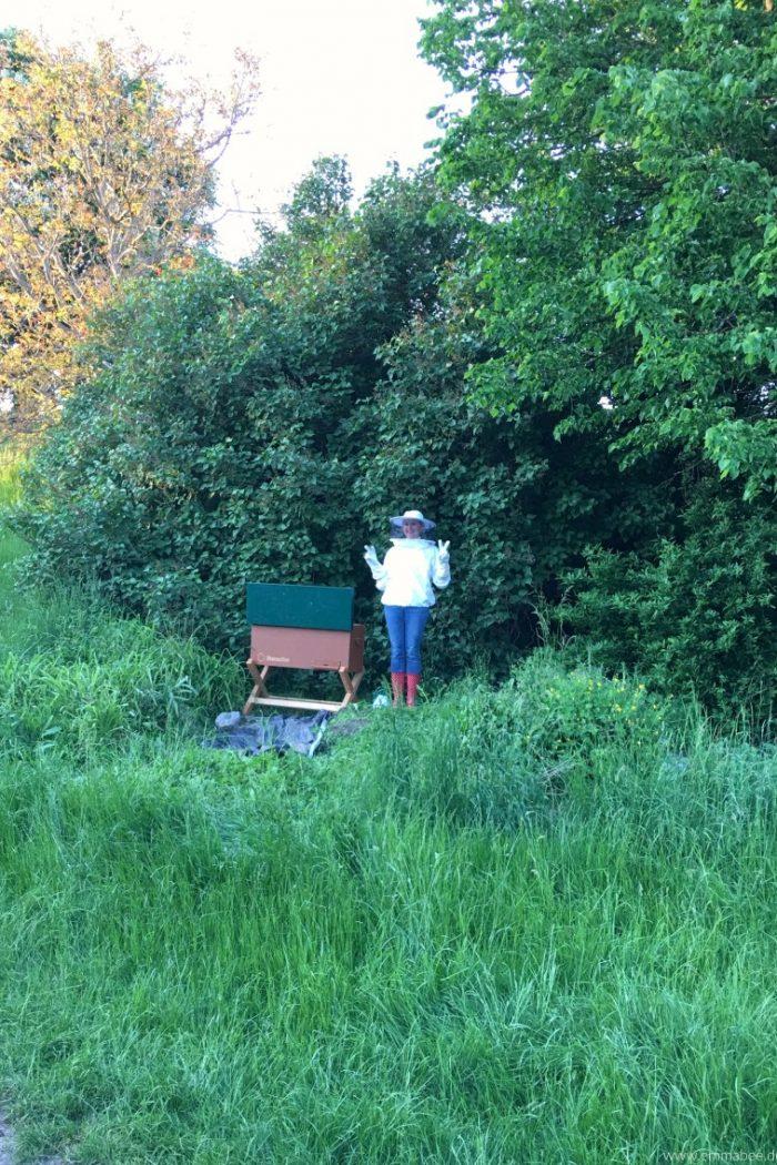 {Leben} Imkern mit der Bienenbox – Teil 4: Fünf Dinge, die ich von den Bienen gelernt habe Enthält unbezahlte Werbung
